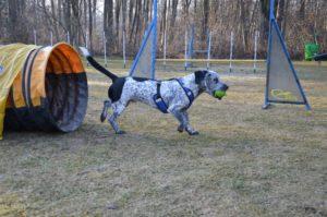 Slika prikazje psa, ki je med šolanjem, ob izhodu iz tunela, nagrajen z žogico,