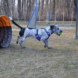 Slika prikazuje zadovoljnega psa, ki na pasjem poligonu veselo nosi žogico, ki jo je dobil kot nagrado.
